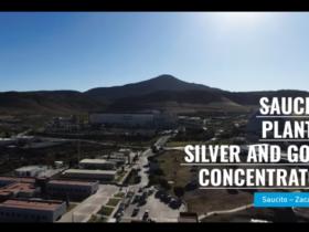 Videos Saucito Plant II